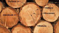 Corte-secado-madera-carpinteria