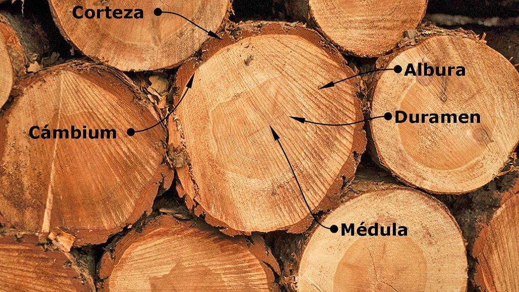 Partes-tronco-carpinteria-madera